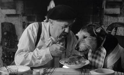 Kutya etetés