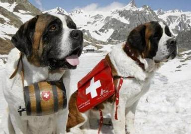 Sainted Alpine Rescue