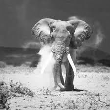 Öreg Elefánt